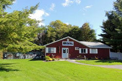dog daycare in the berkshires
