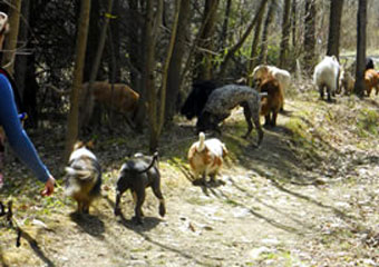 doggy daycare in the berkshires